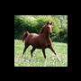 Paard en afrastering